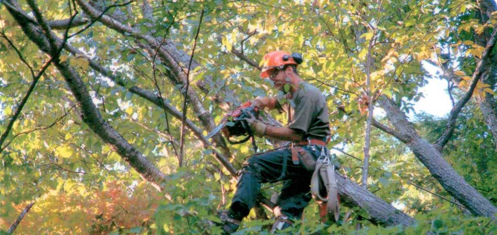 Professional Tree Care Service Muskoka