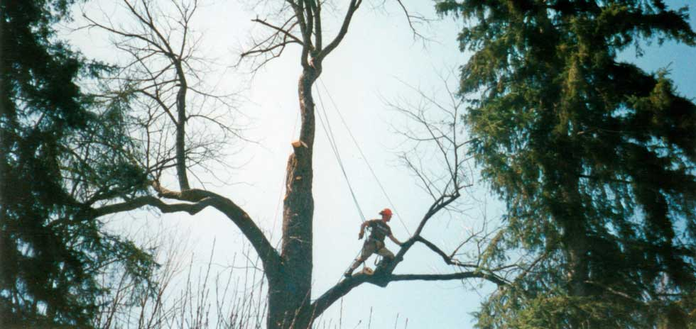 Emergency Tree Service Huntsville, Bracebridge, Parry Sound