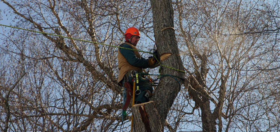 Safe Insured Arborist in Muskoka