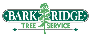 Muskoka Tree Service: Bark Ridge Tree Service